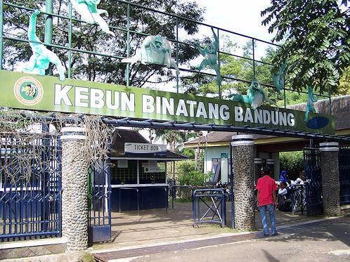 50 Tempat Wisata Bandung Ngangenin Pisan Dijamin Keren Kebun Binatang