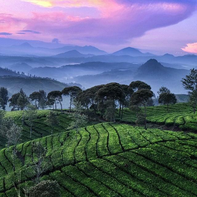 Cukul Plantation Pangalengan Bandung Indonesia Http Www Bdgexpat Monumen Lautan