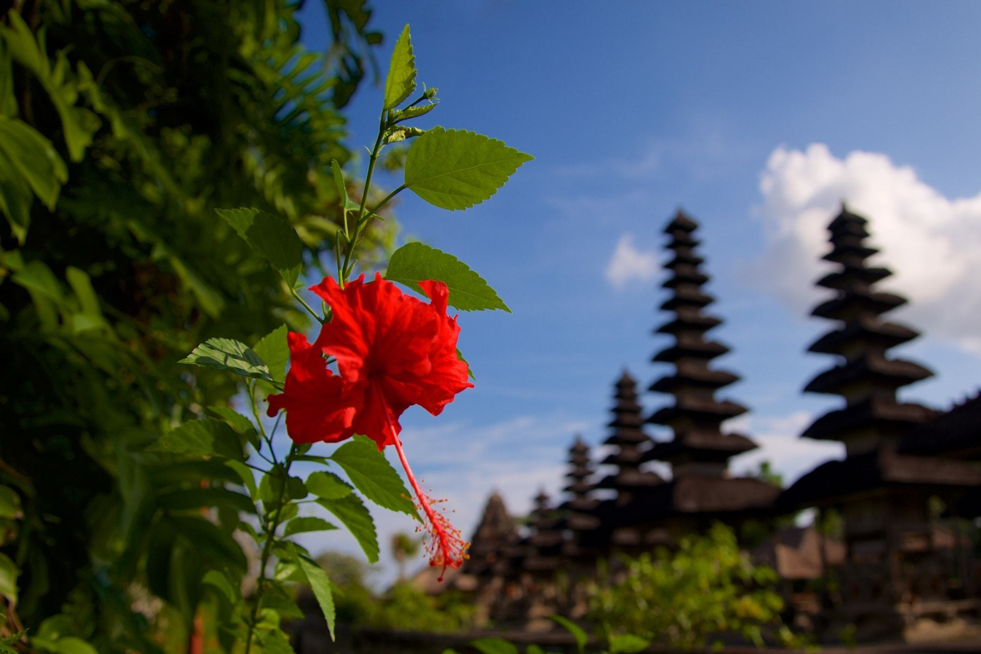 Temple Flower Pura Taman Ayun Mengwi Kabupaten Badung Bali Indonesia