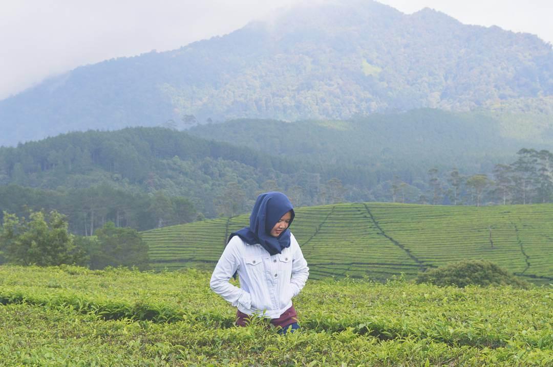 105 Tempat Wisata Bandung Wajib Dikunjungi Kebun Teh Sukawana Kab
