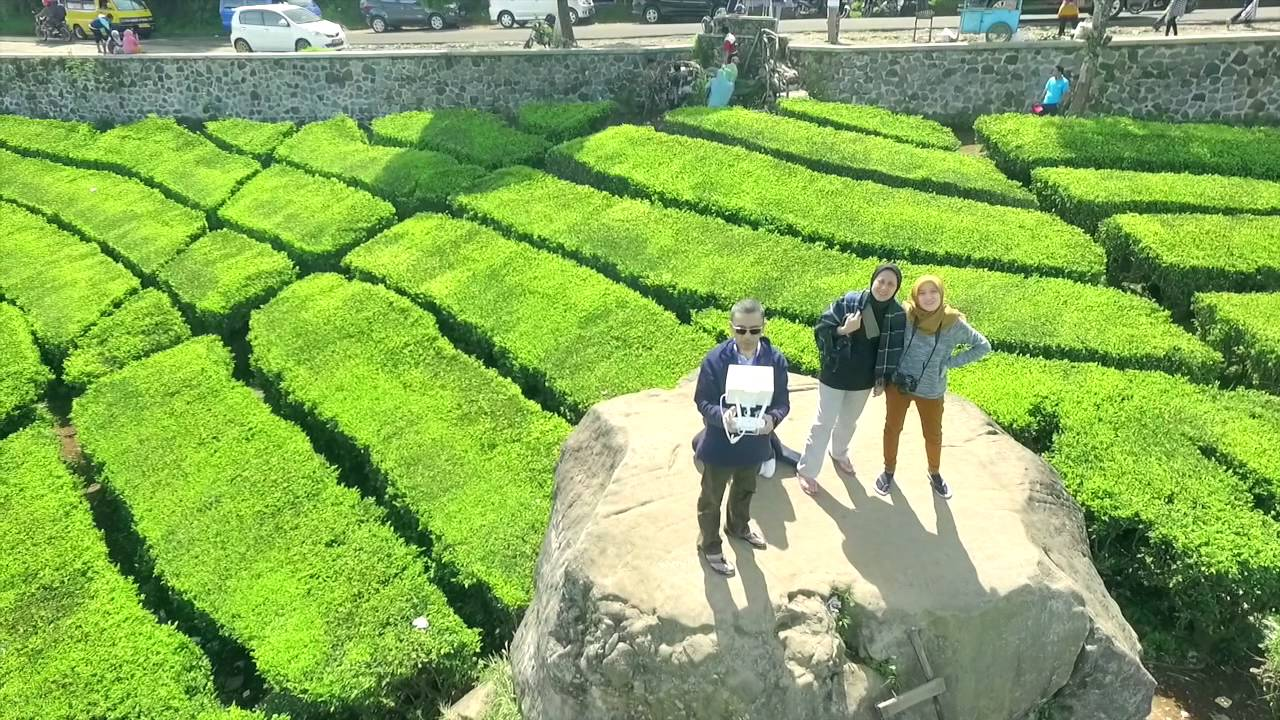 Beautiful Indonesia Ranca Walini Ciwidey Bandung Jawa Barat Youtube Kebun