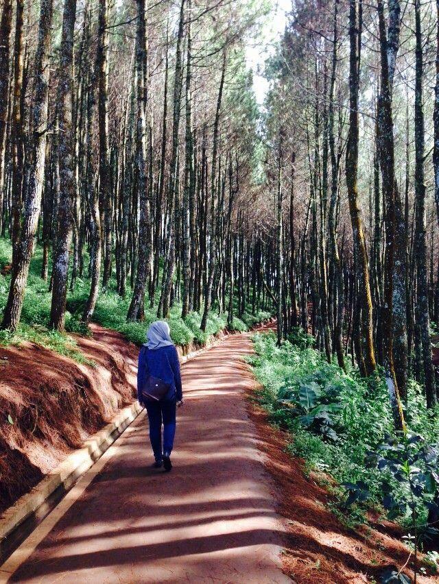 Bukit Moko Bandung Indonesia Places Pinterest Kebun Teh Sukawana Kab