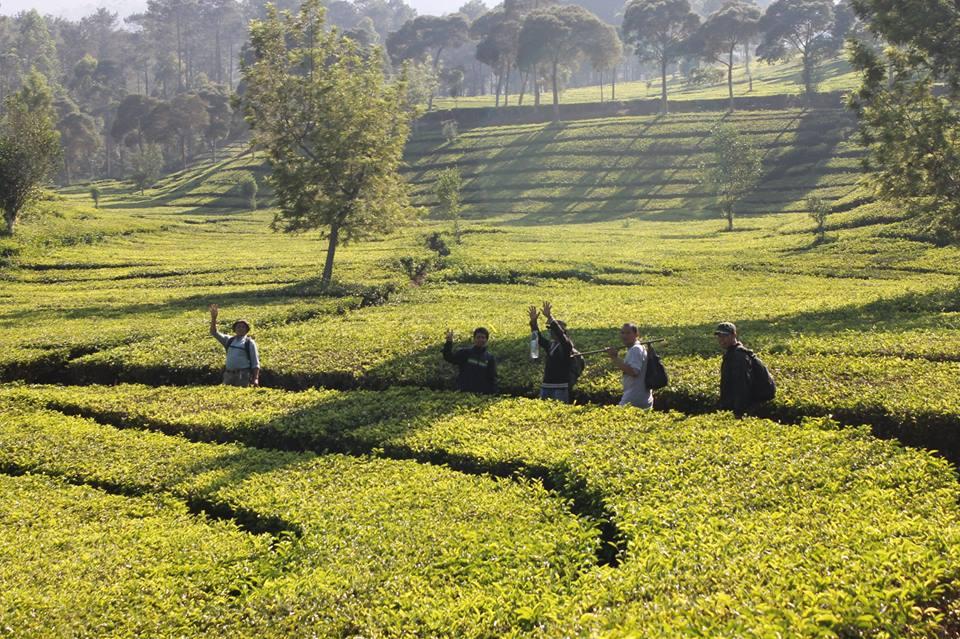 Hiking Gunung Lewati Kebun Teh Sukawana Lembang Asep Villa Kawan