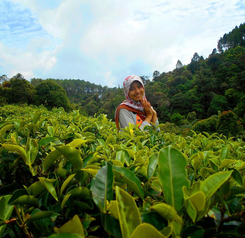Jalan Curug Layung Kabupaten Bandung Barat Viagra Asli Objek Wisata