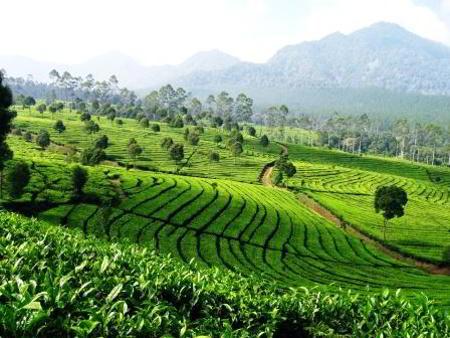 Outbound Lembang Bandung Outing Gathering Zona Adventure Indonesia Kebun Teh