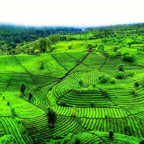 Pt Perkebunan Nusantara Viii Ptpn8 Instagram Photos Videos Pemandangan Pagi
