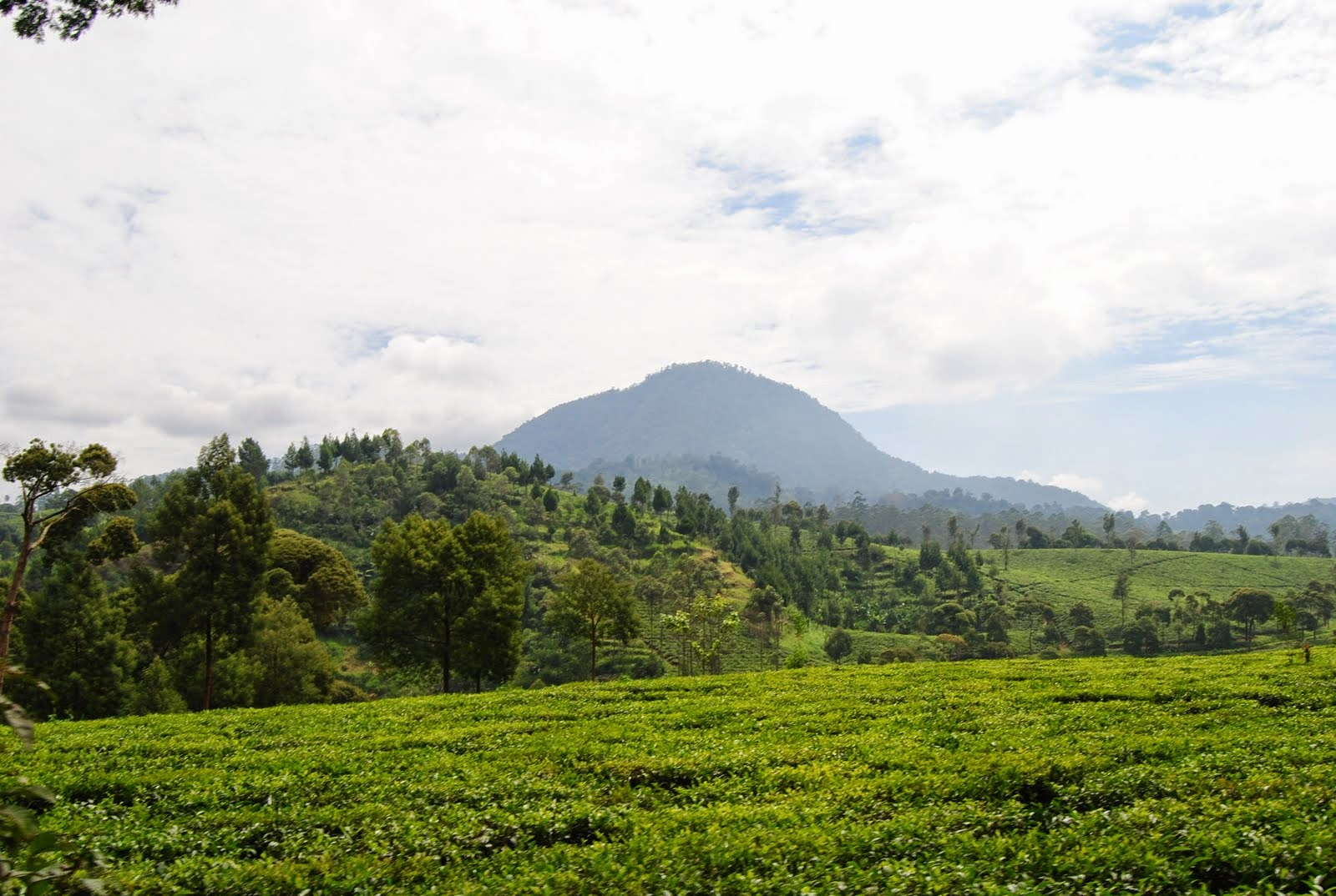 Segarnya Udara Kebun Teh Sukawana Lembang Bandung Plh Indonesia Lokasi