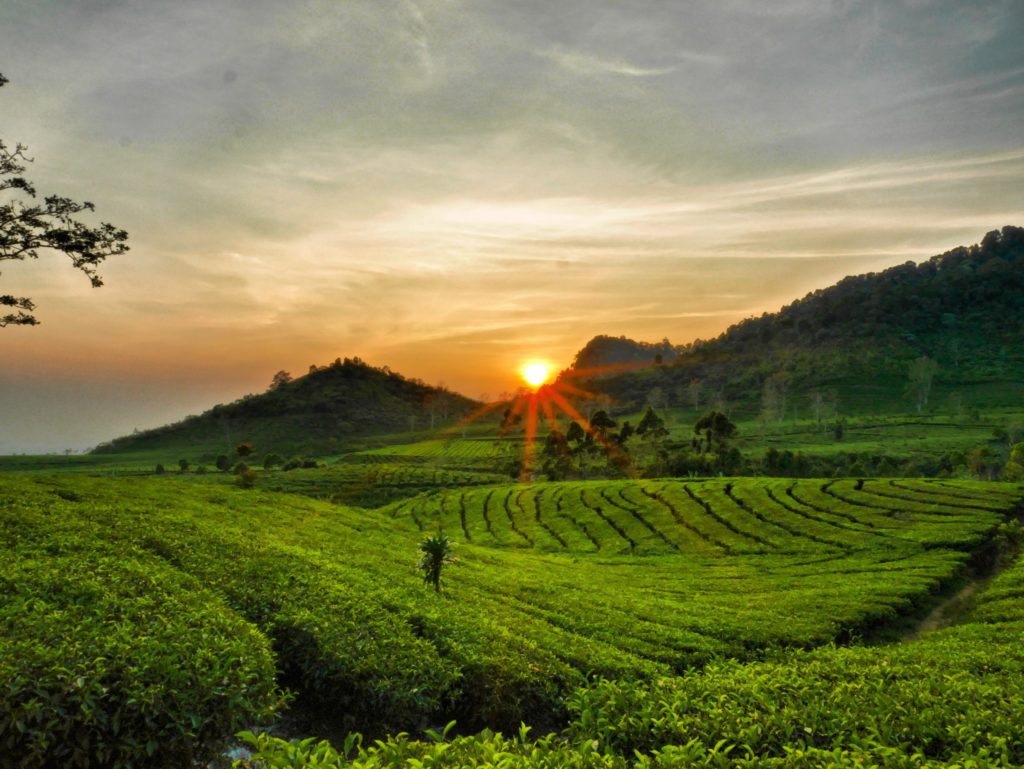 Tujuan Wisata Alam Bandung Akses Biaya Perkebunan Teh Tea Sightseeing