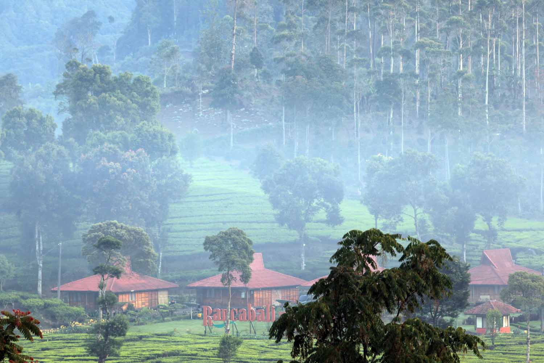 Wisata Perkebunan Teh Bandung Jawa Barat Vacation Kabupaten Kabun Diantaranya