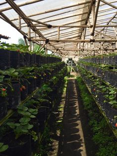 Floating Market Lembang Bandung Trip Moment Pinterest Strawberry Field Rumah