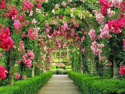 10 Foto Kebun Begonia Lembang Bandung Alamat Lokasi Tiket Harga