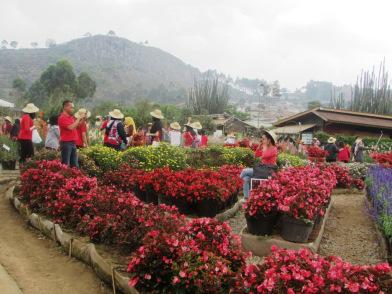Hamparan Bunga Patung Random Kebun Begonia Share Taman Pustaka Awalnya