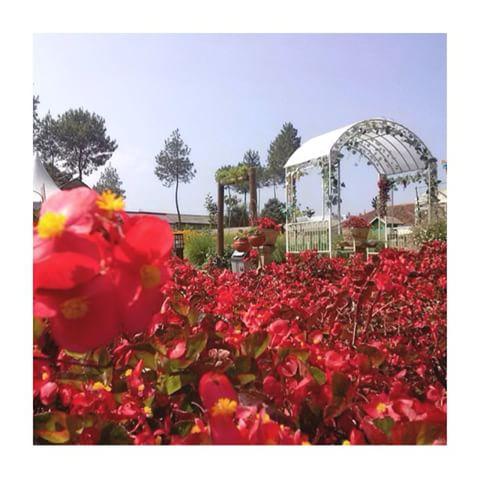 Info Kab Bandung Barat Infobandungbarat Instagram Photos Taman Bunga Begonia