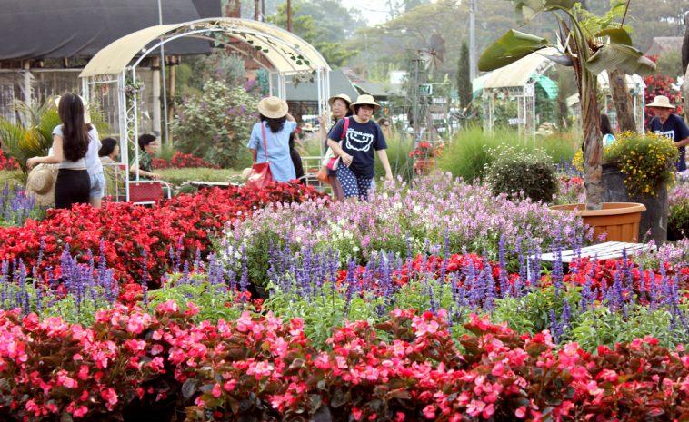Info Wisata Terlengkap Taman Bunga Begonia Lembang Internet Sharetweet Kab