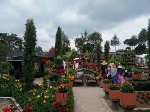 Kebun Bunga Begonia Info Wisata Bandung Tempat Hitz Alam Taman