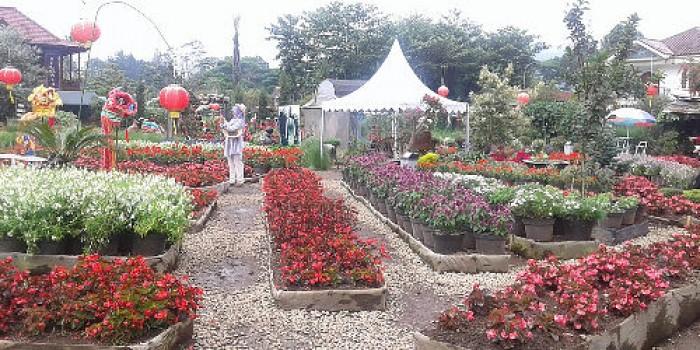 Menikmati Hamparan Bunga Kebun Begonia Glory Taman Kab Bandung Barat