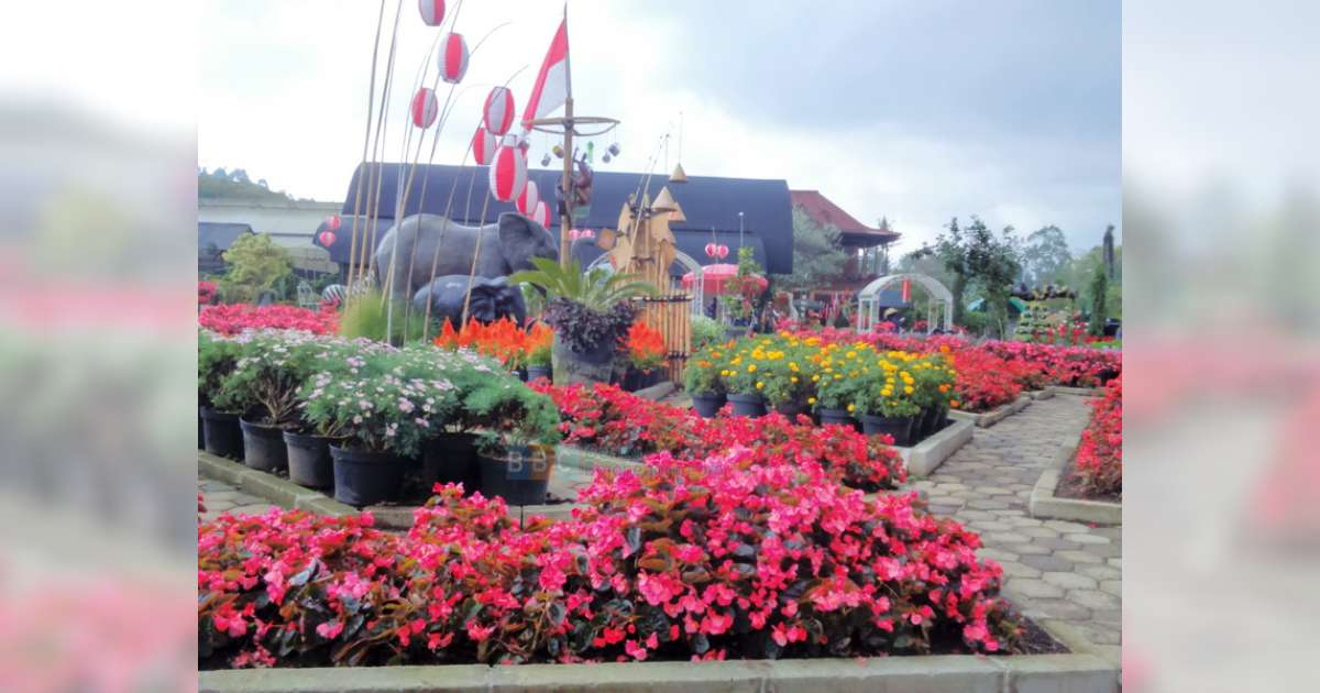 Nikmati Indahnya Bunga Taman Begonia Berita Bojonegoro Kab Bandung Barat