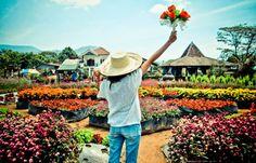Pergipedia Taman Bunga Begonia Area Wisata Favorit Terjangkau Bandung Blogspot