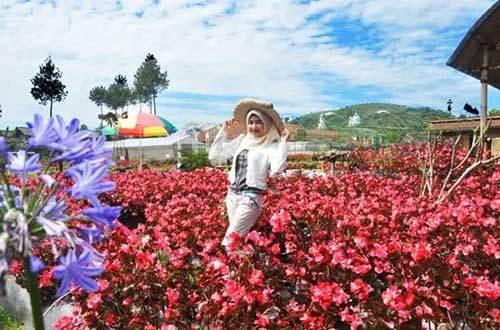 Review Taman Bunga Begonia Lembang Bandung Tempat Wisata Terbaik Image