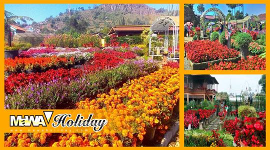 Sensasi Lautan Bunga Taman Begonia Lembang Mawa Holiday Bandung Kab