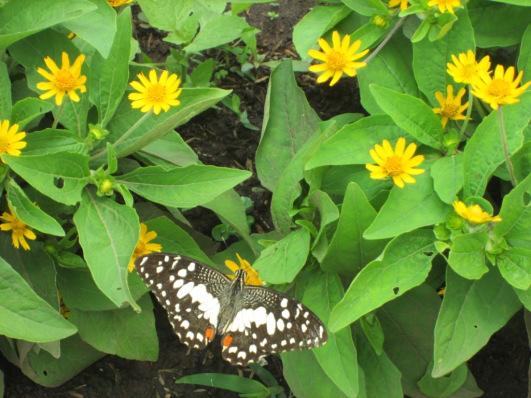 Suer Berkunjung Kebun Begonia Nggak Bikin Bego Omnduut Ya Memang