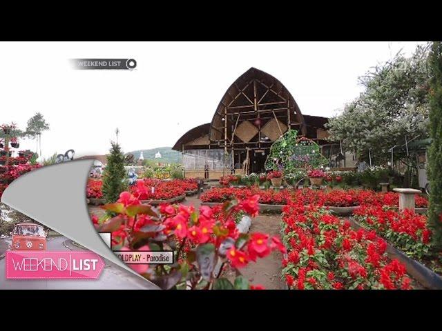 Taman Begonia Lembang Bandung Lautan Bunga Kab Barat