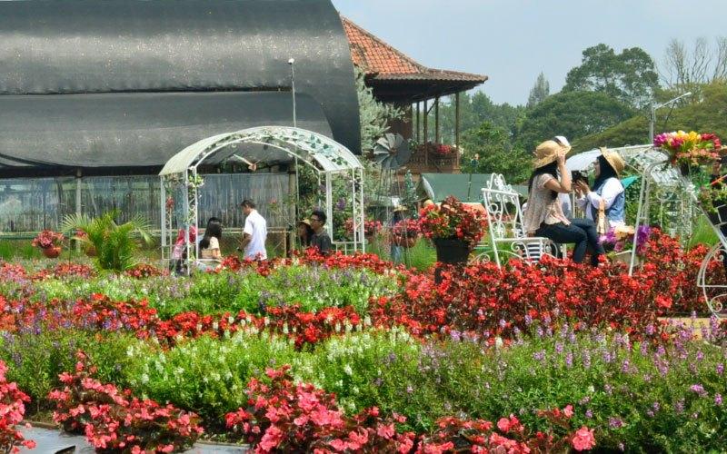 Taman Bunga Begonia Bandung City Tour Kab Barat