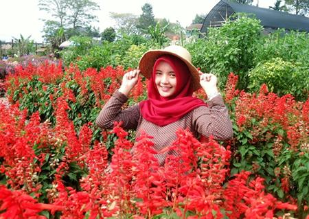 Taman Bunga Begonia Lembang Bandung Wonderful Pinterest Kab Barat