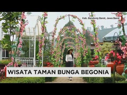 Taman Bunga Begonia Lembang Youtube 2 17 Kab Bandung Barat