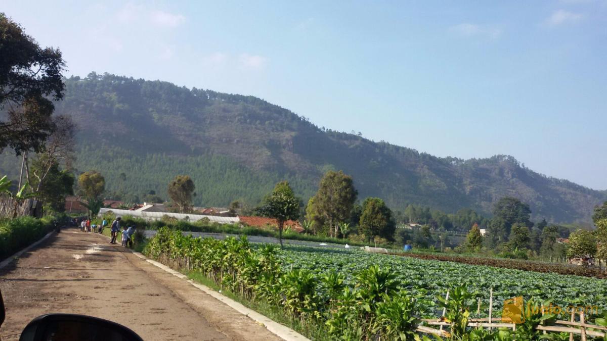 Tanah Maribaya Bandung Jawa Barat Kab Jualo Taman Begonia