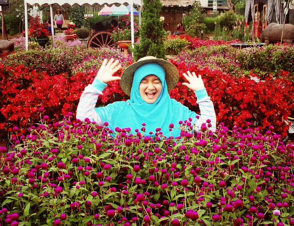 Tempat Wisata Bandung Lembang Kunjungi Foto Taman Begonia Kab Barat