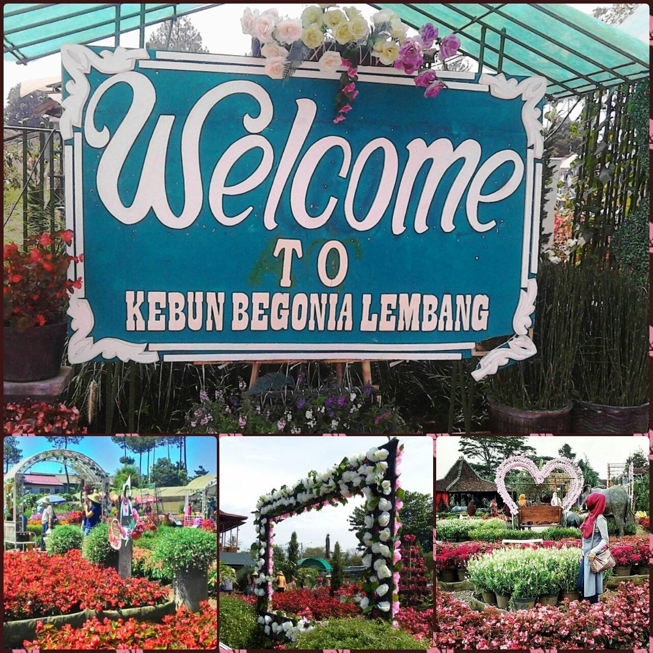 Tempat Wisata Kebun Begonia Lembang Bandung Taman Kab Barat