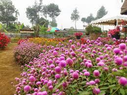 Villa Dekat Kebun Bunga Begonia Lembang Sewa Istana Taman Kab