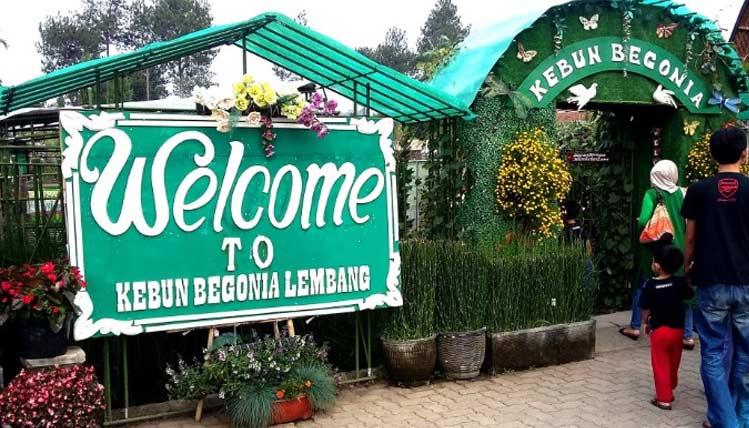 Wisata Kebun Bunga Begonia Rekomendasi Agrowisata Asyik Lembang Tujuan Sebuah