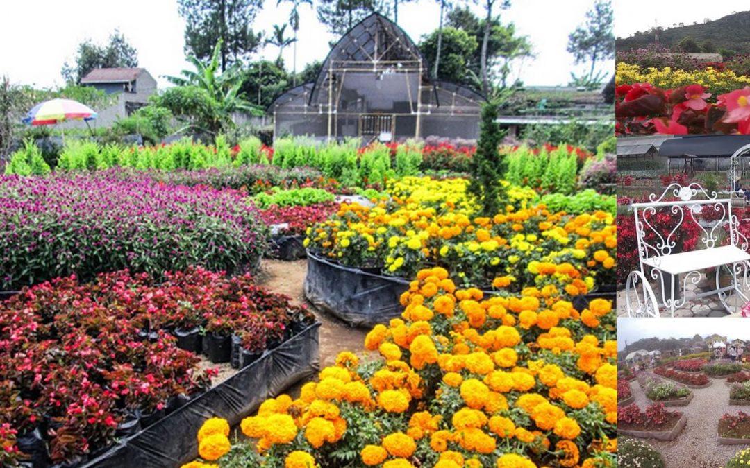 Wisata Taman Bunga Begonia Bandung Sewa Hiace Rental Kab Barat