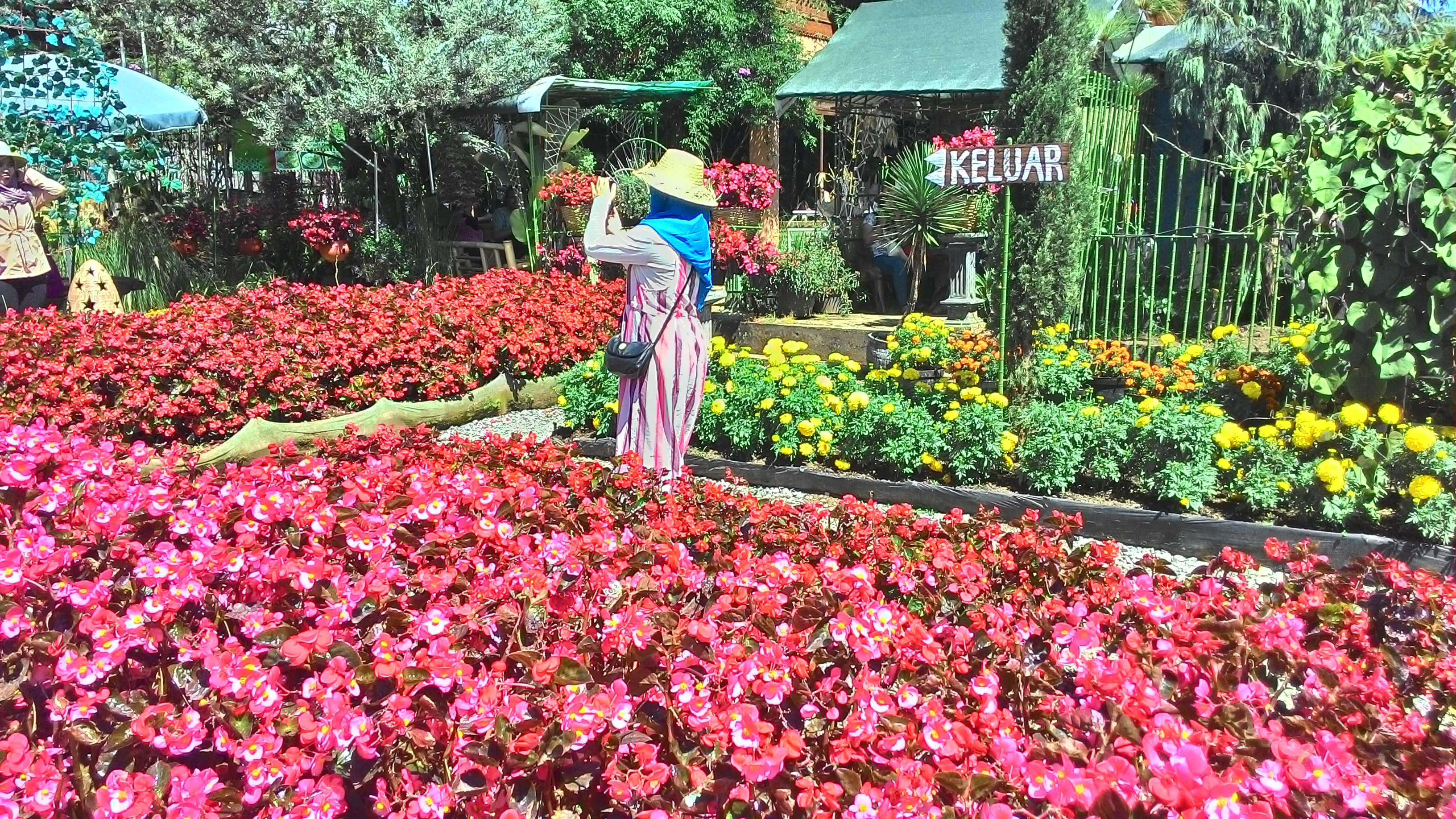 Wisata Taman Bunga Begonia Lembang Bandung Tanya Tempat Tak Sebagai