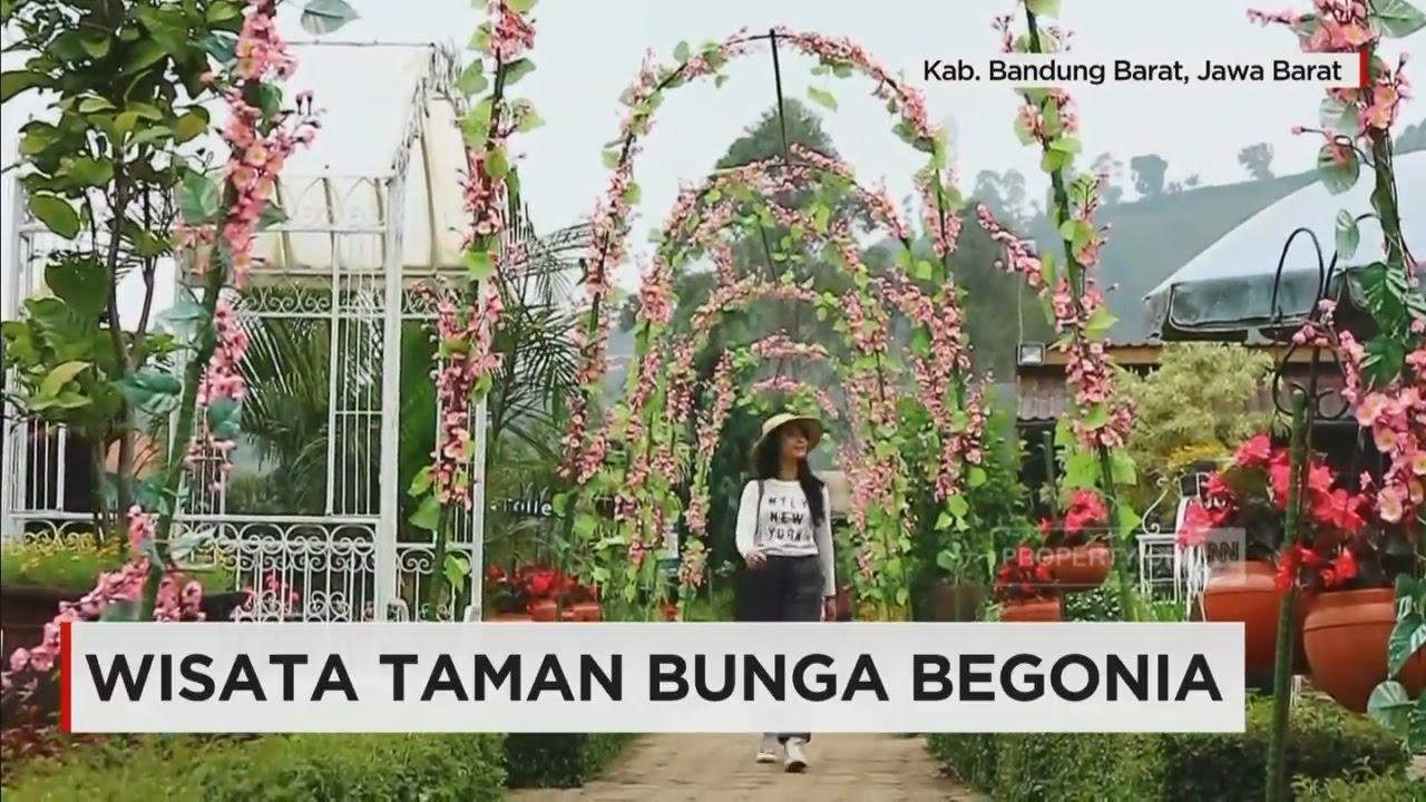Wisata Taman Bunga Begonia Youtube Kab Bandung Barat