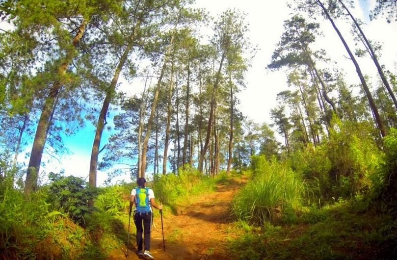 50 Tempat Wisata Lembang Bandung Seru Terkenal Taman Hutan Jaya