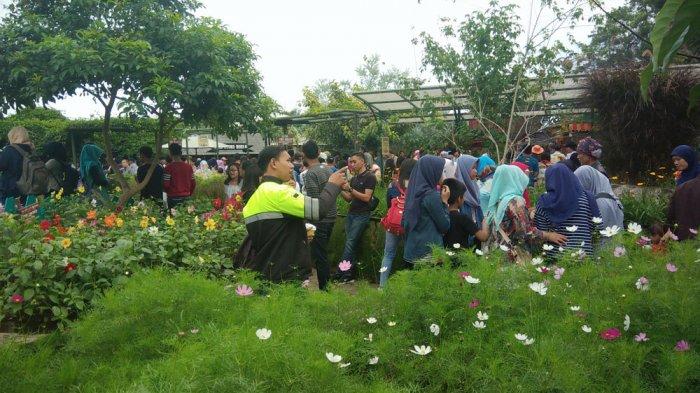 Berwisata Bareng Keluarga Lembang Lihat Dulu Nih Prakiraan Cuacanya Farmhouse
