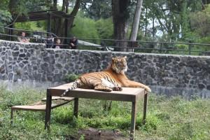 15 Tempat Wisata Terpopuler Bandung Binpers Kebun Binatang Kab