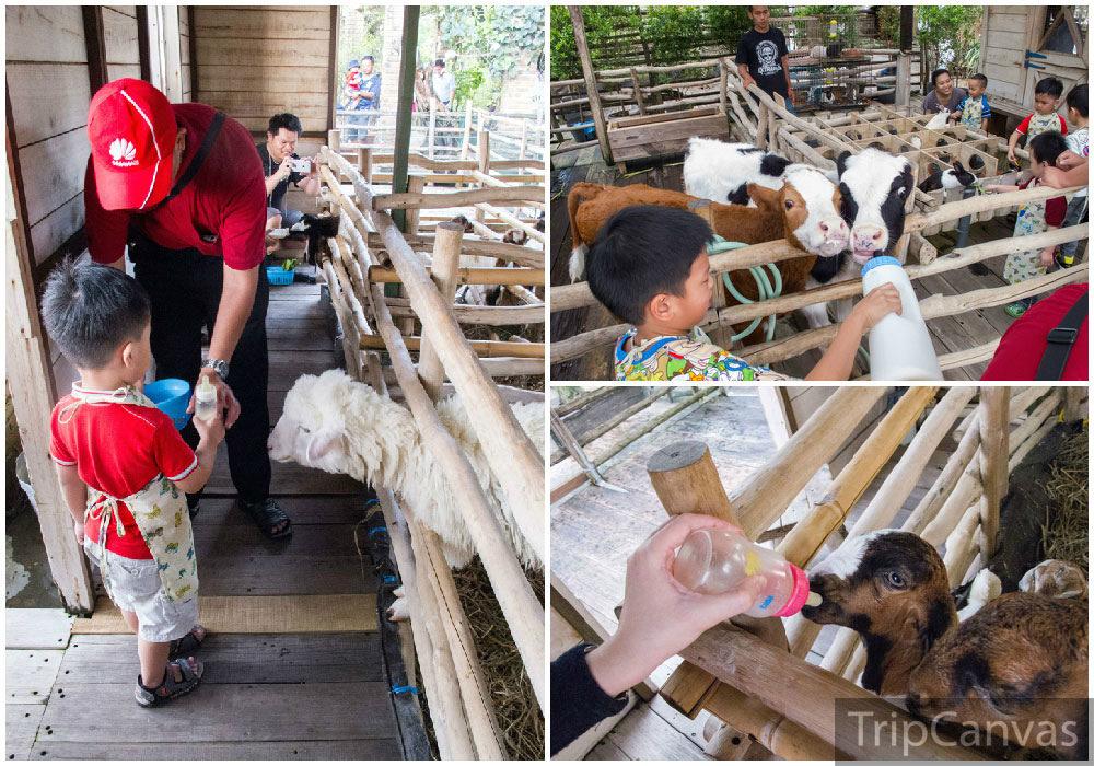 19 Tempat Wisata Anak Terasik Keluarga Bandung Bagian Lain Rooftop