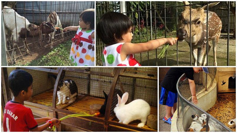 19 Tempat Wisata Anak Terasik Keluarga Bandung Menawarkan Aktivitas Bertema