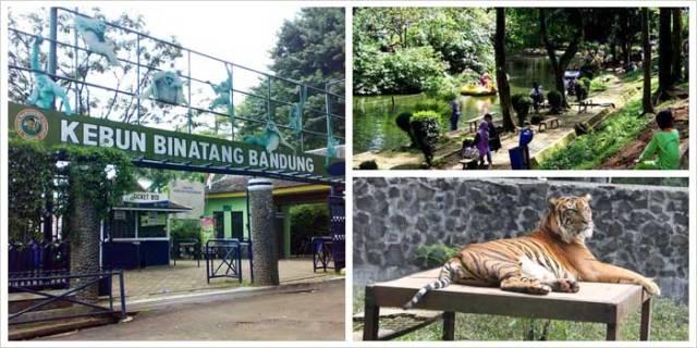 34 Tempat Wisata Anak Bandung Menyenangkan Dikunjungi Kebun Binatang Kab