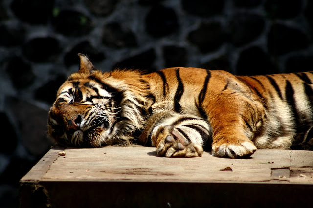 73 Tempat Wisata Bandung Menarik Dikunjungi Easy Yuk Berkunjung Kebun