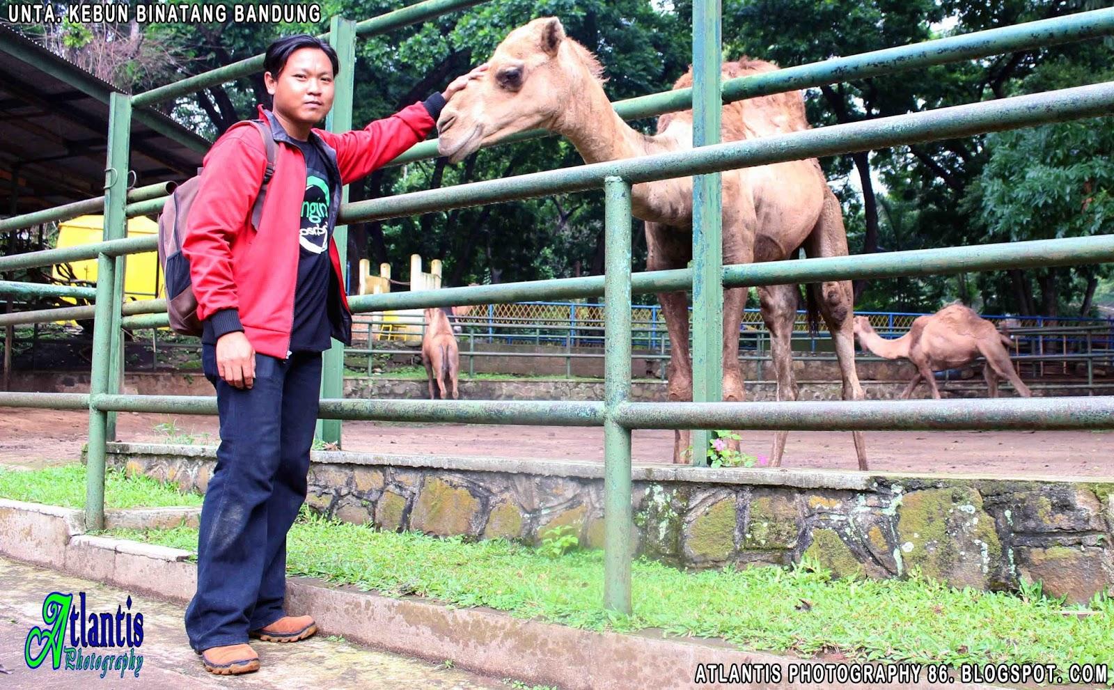 Atlantis Photography Krui Bandung Zoo Kebun Binatang Satwa Antaranya Kijang