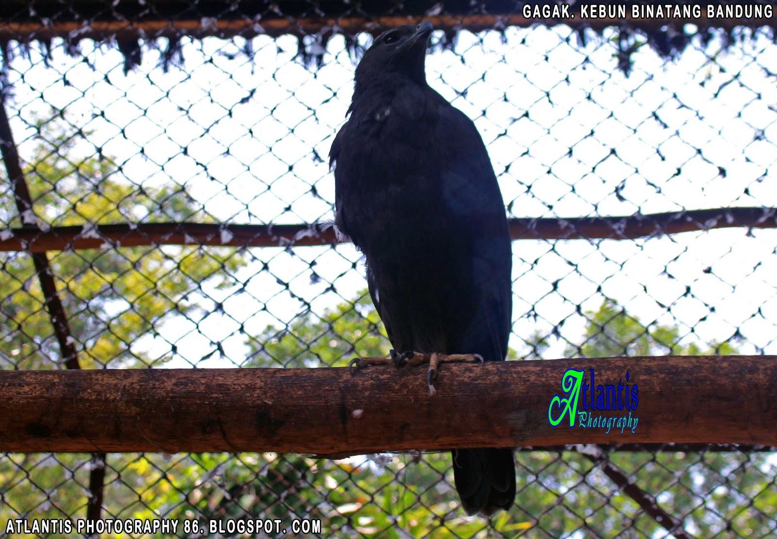 Atlantis Photography Krui Bandung Zoo Kebun Binatang Terdapat Segala Macam