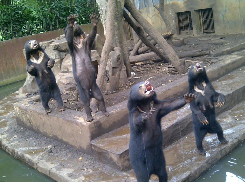 Barusan Nemu Foto Abg Ababil Berburu Beruang Kaskus Video Bonbin