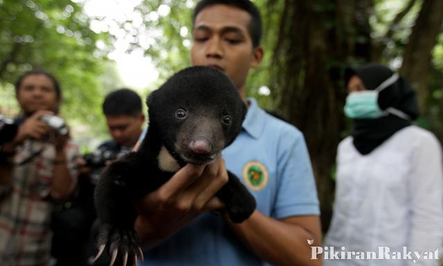 Binatang Bandung Lakukan Pertukaran Satwa Kebun Solo Kab