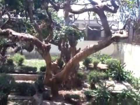 Biyawak Kebun Binatang Bandung Youtube Kab
