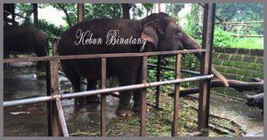 Daftar Tempat Wisata Bandung Cocok Keluarga Kebun Binatang Kab